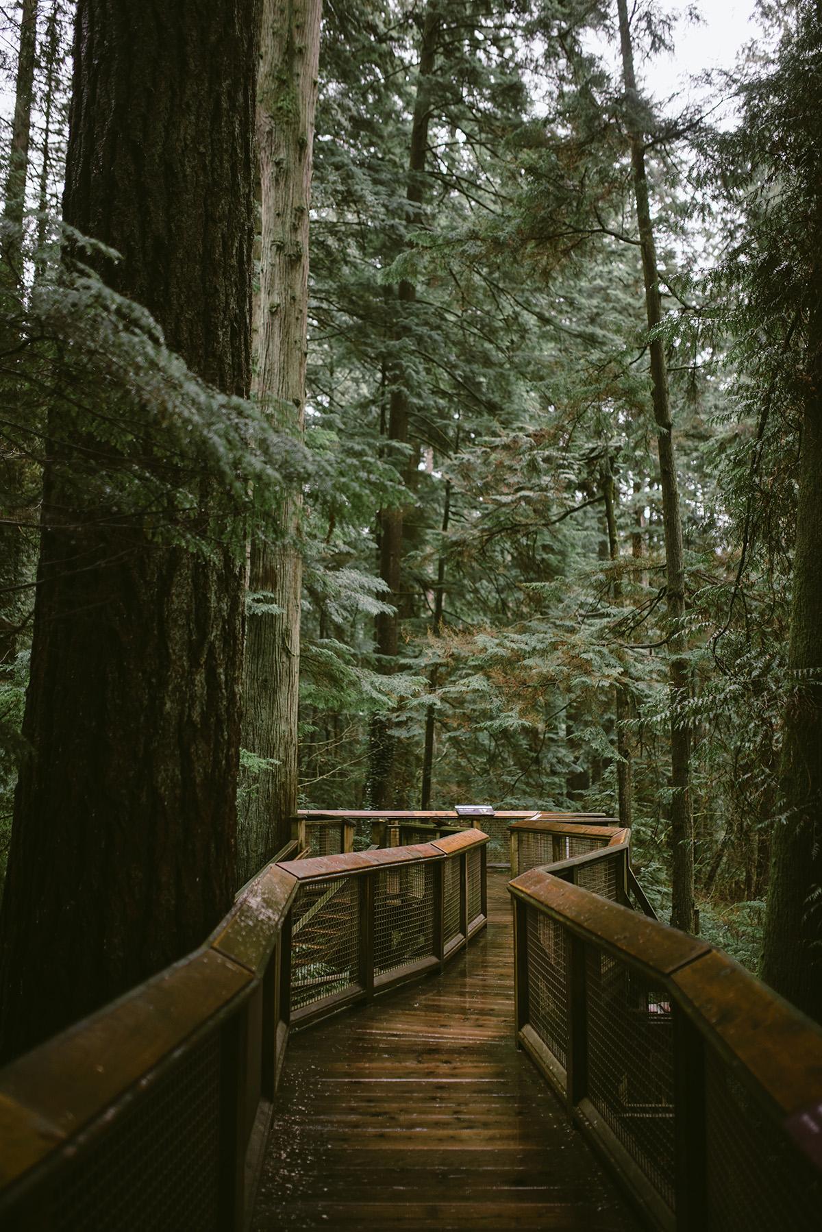 vancouver capilano trees path