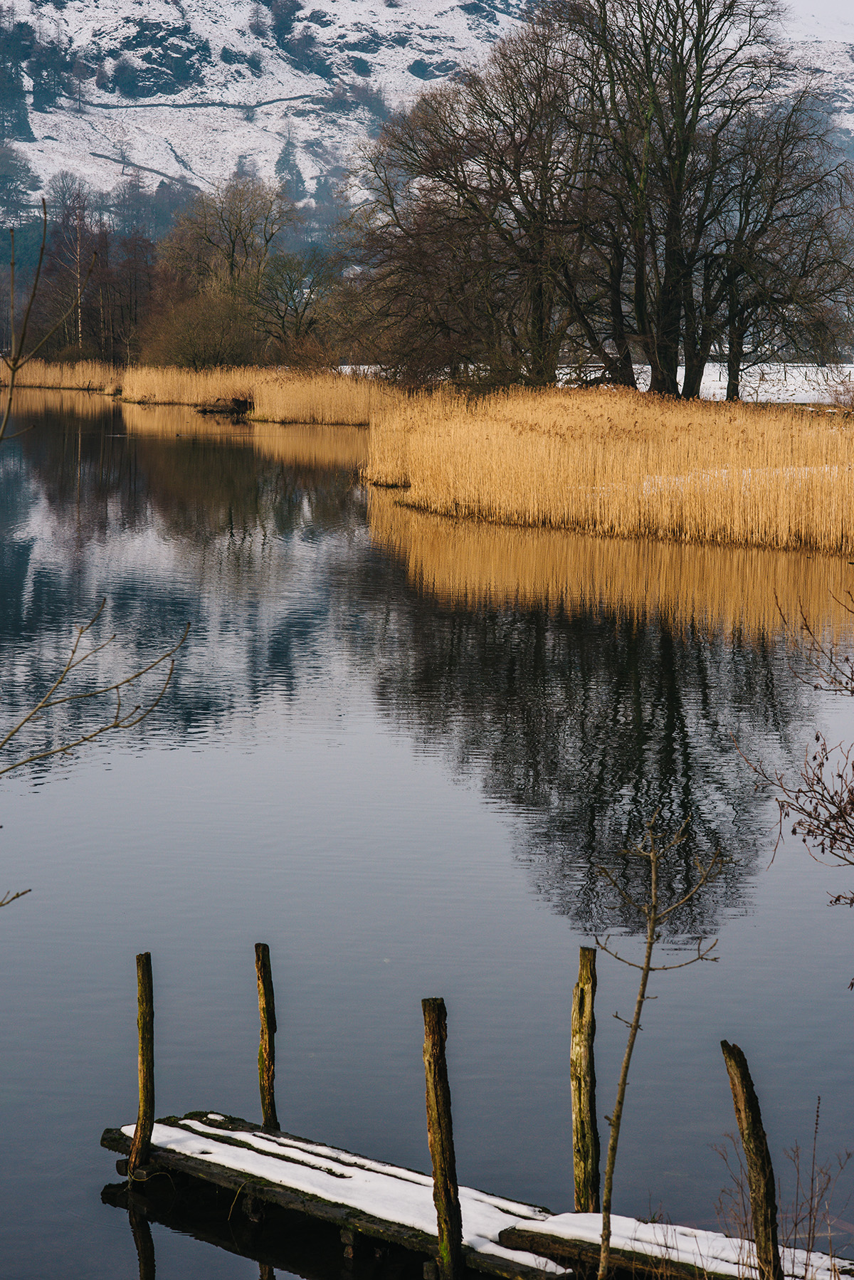 Lake Windermere reeds and lake